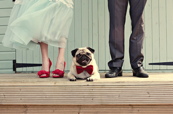 dog with bow tie - Dottie Photography - midsouthbride.com