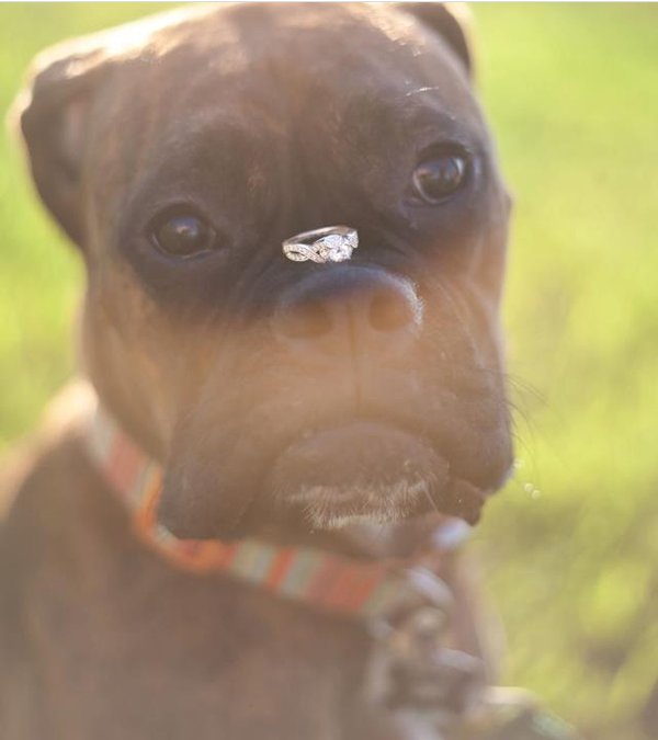 dog with engagement ring - photo by Kelly Ginn Photography - midsouthbride.com