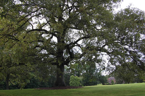Memphis Wedding Venue - The Bridge at Chrisleigh Farm Big Tree